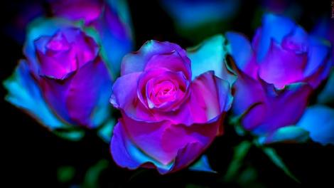 Cabinet de r flexologie plantaire - Fotos flores preciosas ...